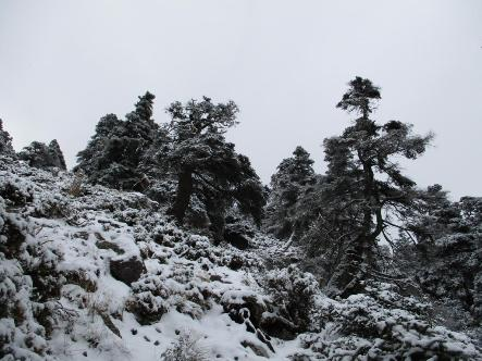 sierra-de-las-nieves-5.jpg